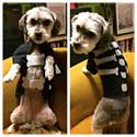 Free Dog Halloween Costume Templates